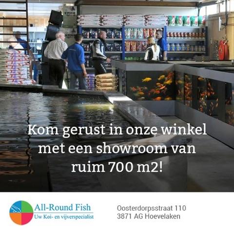 Winkel All-Roundfish Hoevelaken - Voor vijvers en producten - Koi en vijvervissen