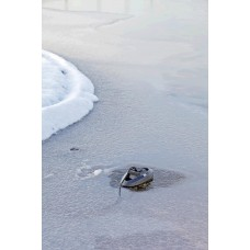 Oase IceFree Thermo 330 Vijvertoebehoren